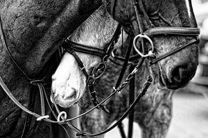 Horses van Wybrich Warns