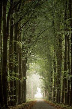 De pilaren van het bos van Jos Erkamp