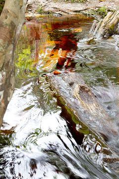 Schwarzwasser in Suriname von rene marcel originals
