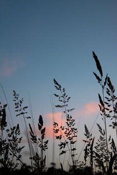blühendes Gras von Eva Overbeeke