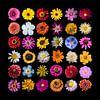 Collage sierbloemen van Anne Stielstra thumbnail