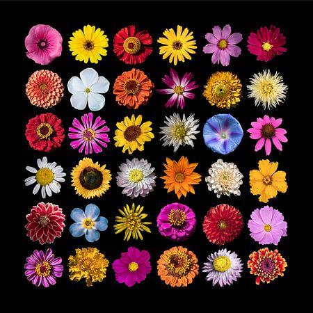 Collage sierbloemen van Anne Stielstra
