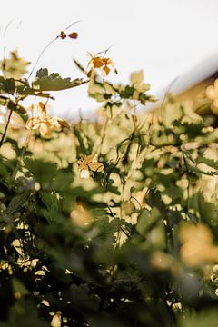 Gelbe Blumen von Tessa Dommerholt
