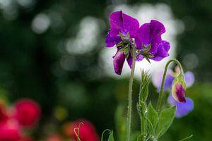 Kleurig bloemenspel. van