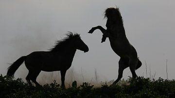 Two Konik horses sur Anne Koop