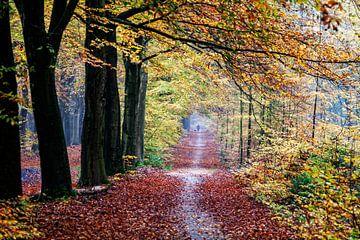 Uitlaten hond in Gasselte herfst bos van R Smallenbroek