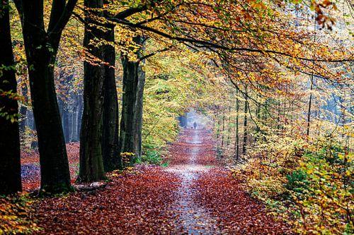 Uitlaten hond in Gasselte herfst bos