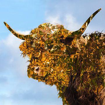 Schotse hooglander in kleur van Frans Vanderkuil