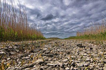 Dürre in der Westhoek von Pier de Haan