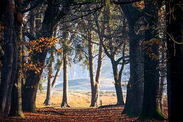 Herbst auf der Heide - Rand in Waldnähe in Zeist, Utrecht - Utrechtse Heuvelrug - Schafstall von John Ozguc