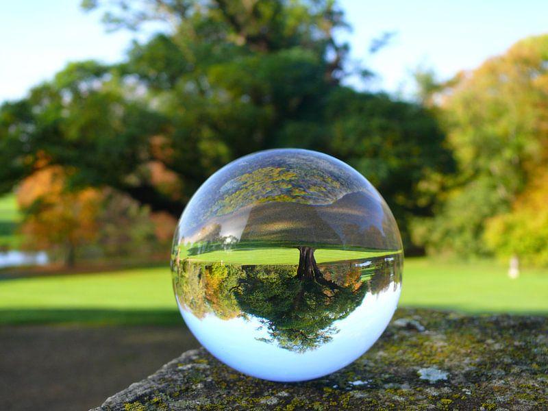 Baum Durch Eine Glaskugel Betrachtet Glaskugel Fotografie