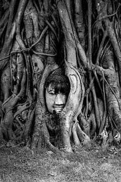 boedha in een boom van Puck Peute