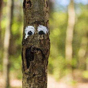Face tree
