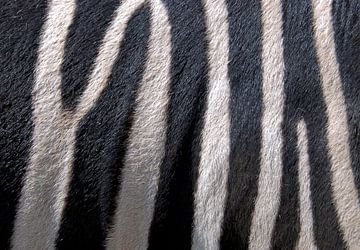 Zebra von Sigrid Klop