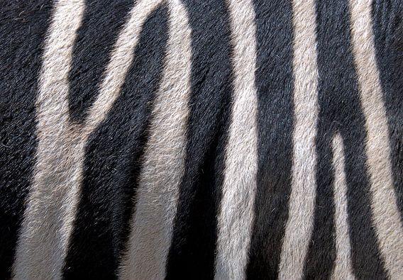 Zebra van Sigrid Klop