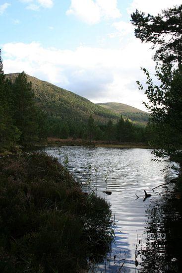 Blick über den Schottensee