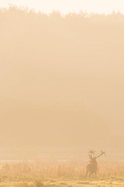 Edelhert in de mist van Kris Hermans