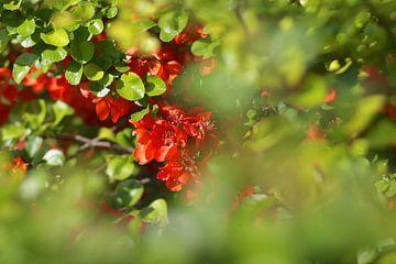Rode bloemen van Marianna Pobedimova