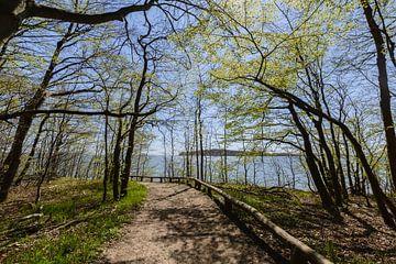 Rad- Wanderweg  entlang am Naturstrand in der Goor von GH Foto & Artdesign