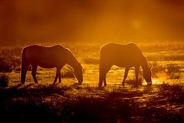 Paarden in de Zonsondergang van Andrea de Vries