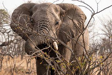 Olifant op de savanne van Photo By Nelis