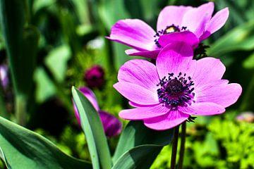 Paarse bloemen met groene achtergrond van Nadine Rall