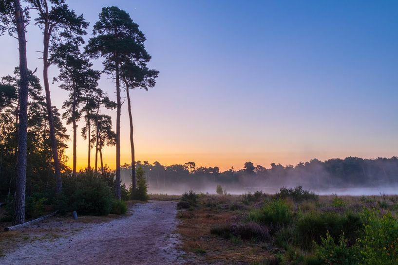 Zonsopkomst met mist en bomen van Stephan Krabbendam