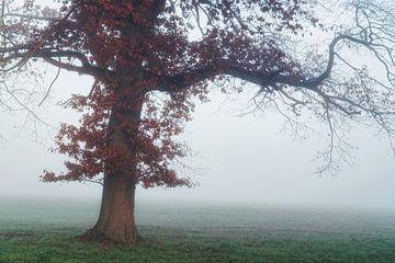 Bomen hebben lange armen van Joris Pannemans - Loris Photography