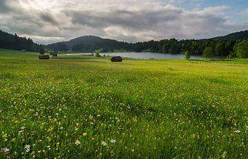 Prairie fleurie sur le lac Geroldsee. sur Jos Pannekoek