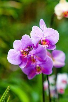 Orchidee 10 van John van Weenen
