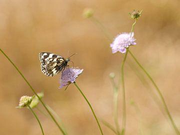 Vlinder van Margo Biewinga