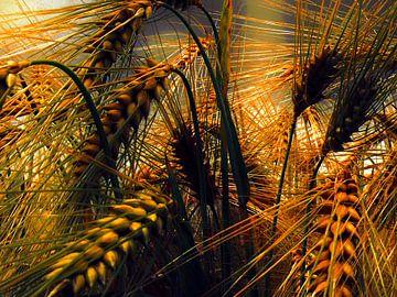 Getreide van Burkhard Kohnert