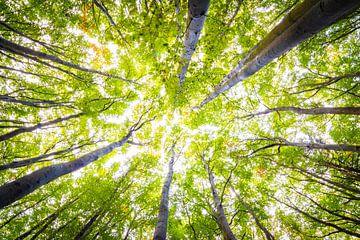 La forêt en automne sur Martin Wasilewski