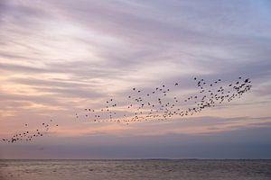 Ein Vogelschwarm an einem schönen Himmel