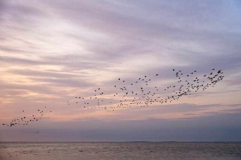 Ein Vogelschwarm an einem schönen Himmel von Barbara Brolsma