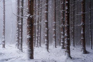 Rode bossen van Martin Podt