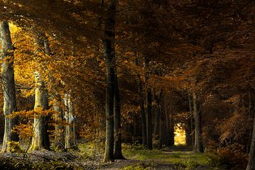 In dunklen Bäumen von Kees van Dongen