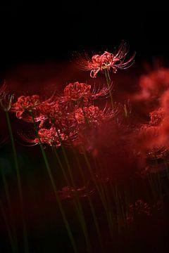 Fleur rouge étincelante, Takashi Suzuki sur 1x