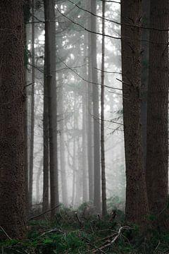 The woods van