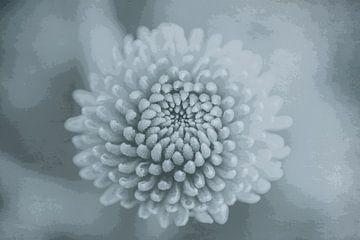 Blume der Mini-Chrysantheme von Marianne Twijnstra-Gerrits