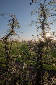 Bloesem fruitboom en molen 05 von Moetwil en van Dijk - Fotografie
