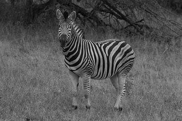 Zebra Zwart & Wit von Wesley Klijnstra