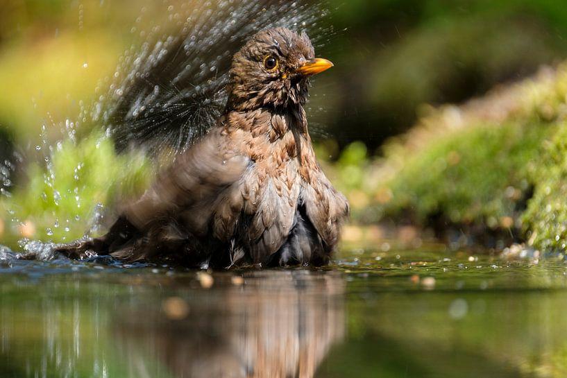 Merel in bad van Joke Beers-Blom