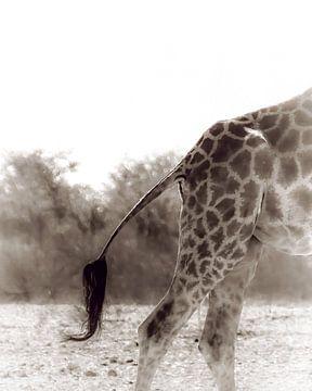 Een veeg met de staart van Joris Pannemans - Loris Photography