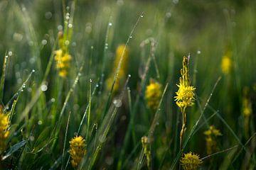 Bloemen met dauw in de ochtendzon