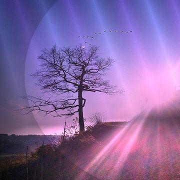 Lichtquelle von Vera Laake