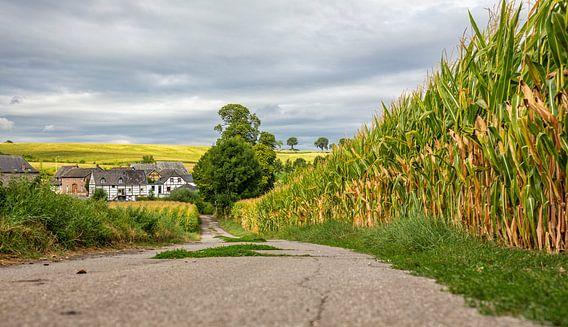 Mamelis in Zuid-Limburg van John Kreukniet