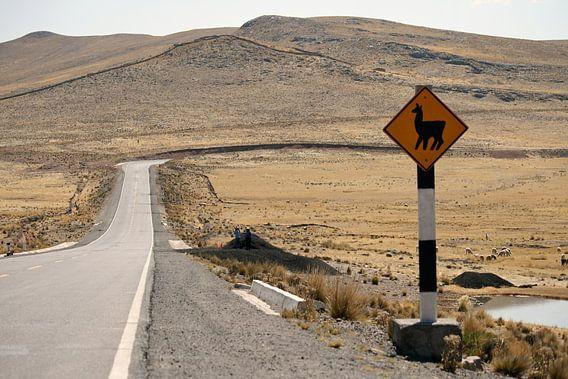 Lama crossing van Gert-Jan Siesling