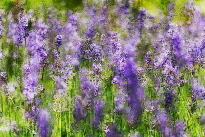 Bloemenveld van Huub Keulers