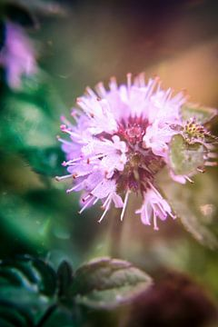 Blume von Greet Thijs